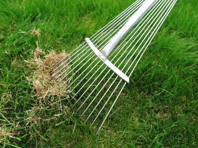 When is it best to dethatch your lawn