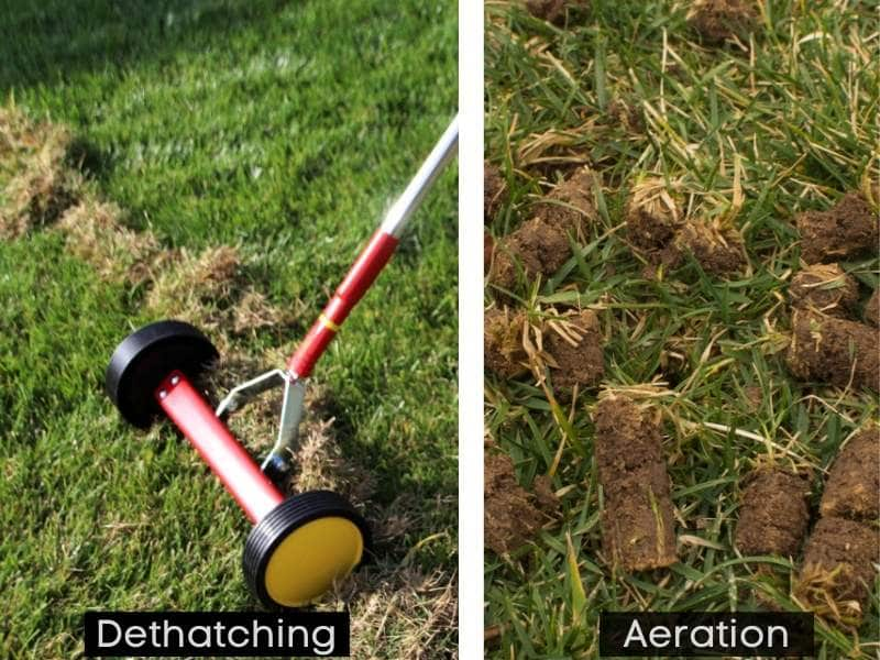 Dethatching vs aeration