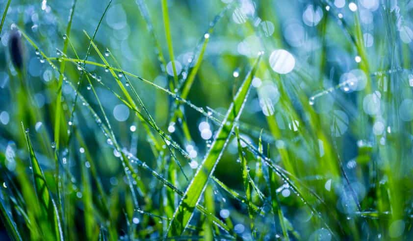 Can you cut wet grass - is it bad to mow wet grass
