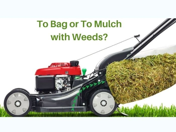 Should I bag grass clippings if I have weeds in lawn?