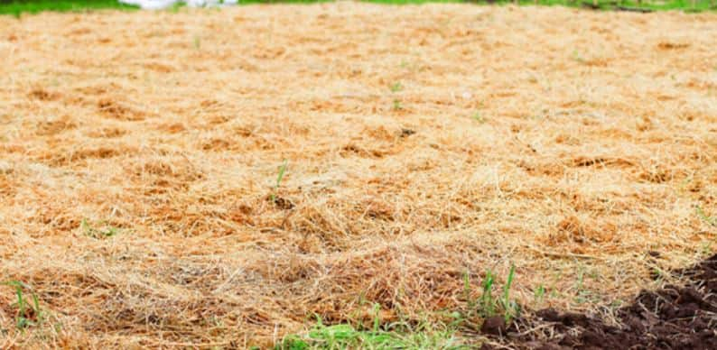 Use stray as a temporary fix for a muddy yard