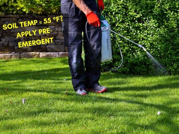 When to Apply Crabgrass Preventer? Before or After Rain?